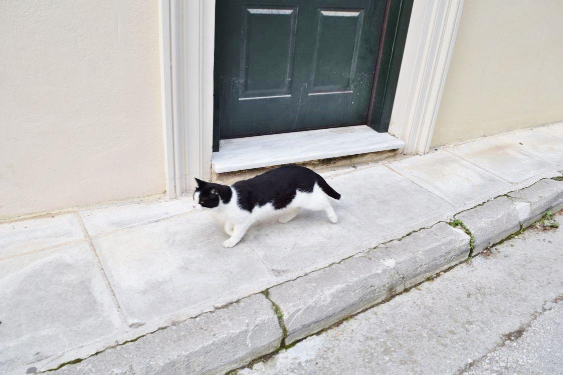 アテナイのネコ