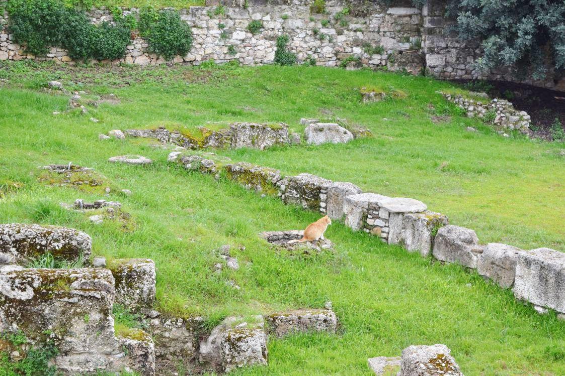 アテネの遺跡にいたネコ