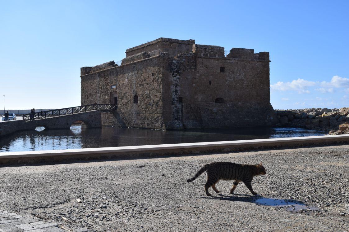 パフォス城とネコ