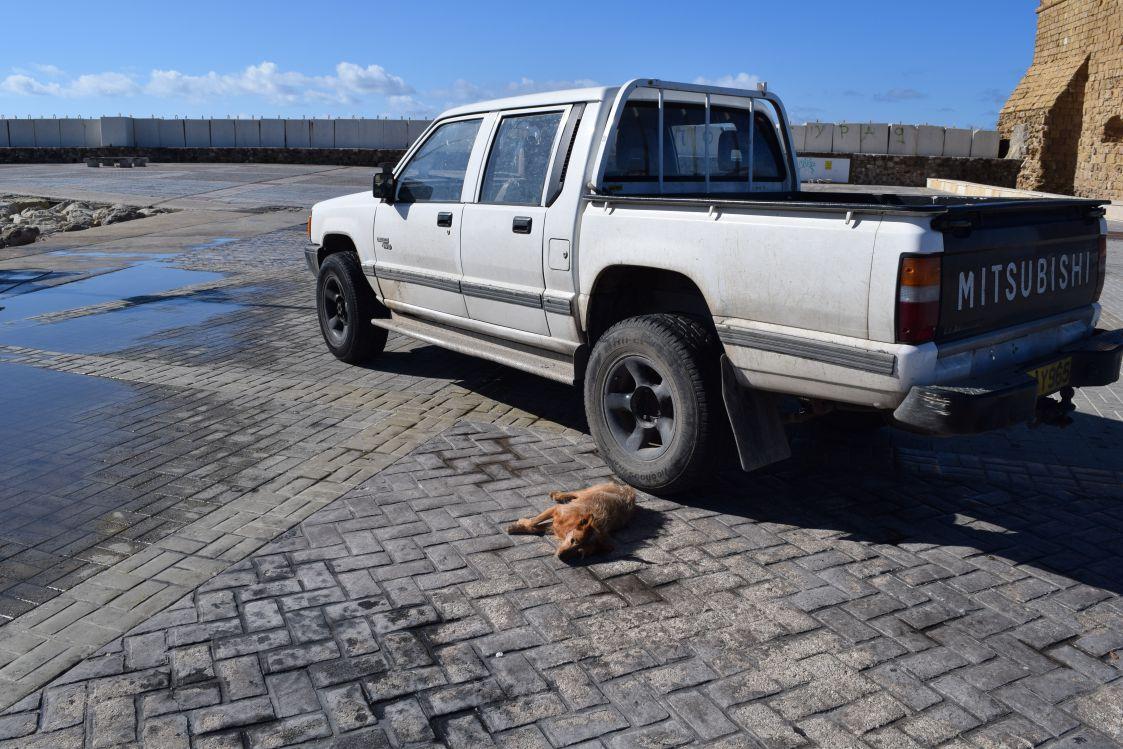 パフォス城-行き倒れの犬