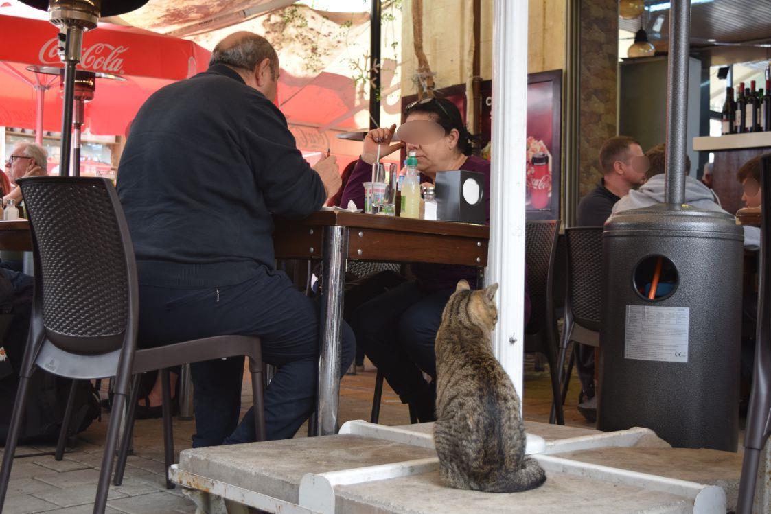 北キプロス-ニコシア-レストラン-猫のお客さん